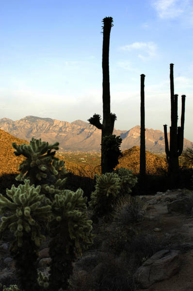 Photograph - Saguaro Silhouette by Jill Reger