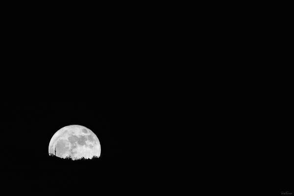 Photograph - Saguaro Silhouette by Rick Furmanek