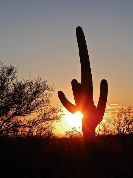 Photograph - Saguaro Sunset by Don Mercer