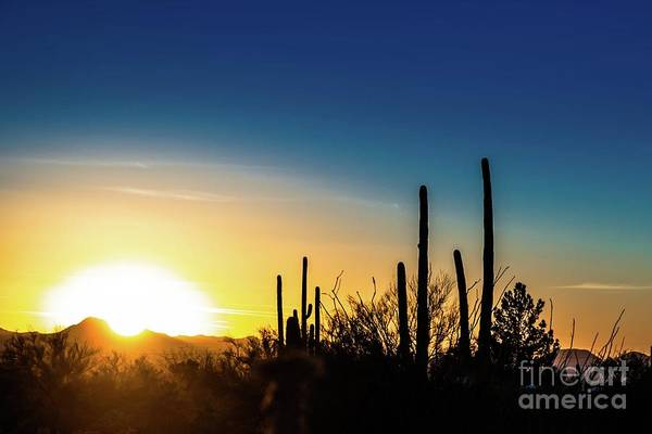Photograph - Saguaro Sunset by Jim DeLillo