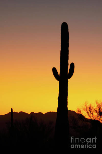 Wall Art - Photograph - Saguaro Sunset Silhouette by Max Allen