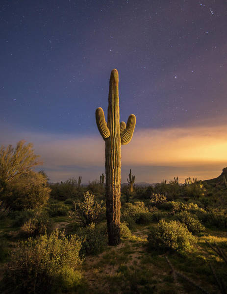 Photograph - Saguaro by Whit Richardson