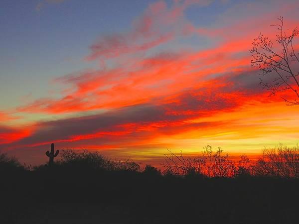 Photograph - Saguaro Winter Sunrise by Judy Kennedy