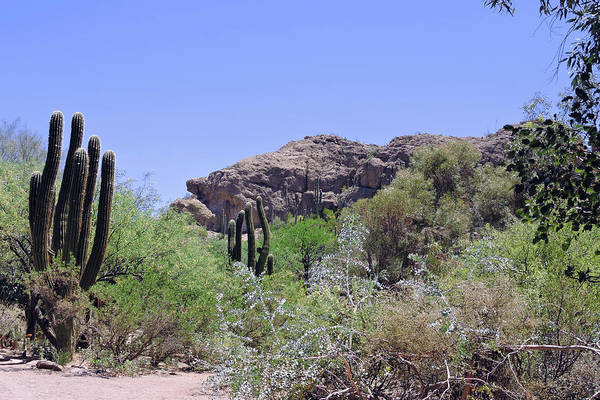 Photograph - Saguaros by Grace Dillon