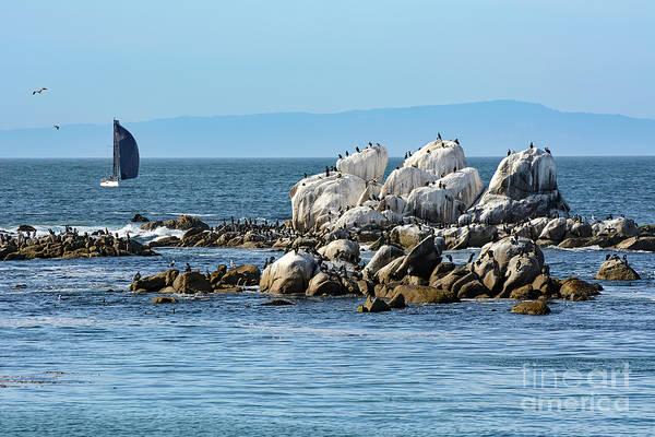Photograph - Sailboat At Bird Rock by Susan Wiedmann