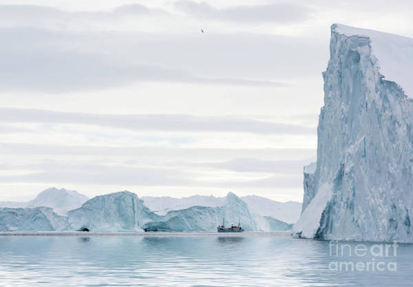 Glacier Bay Photograph - Sailing Through  The Icefjord by Janet Burdon