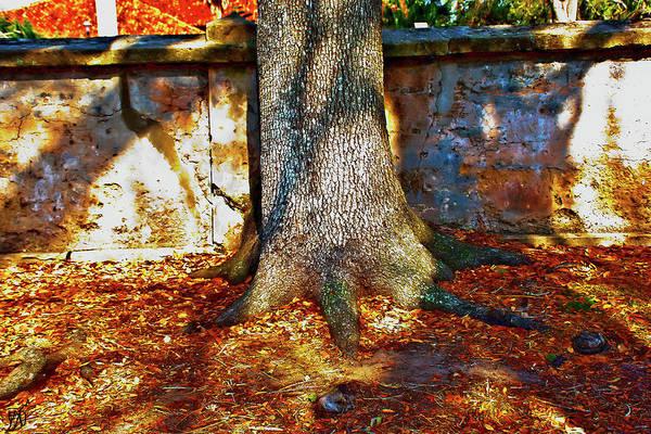 Photograph - Saint Augustine Tree Shadows by Gina O'Brien