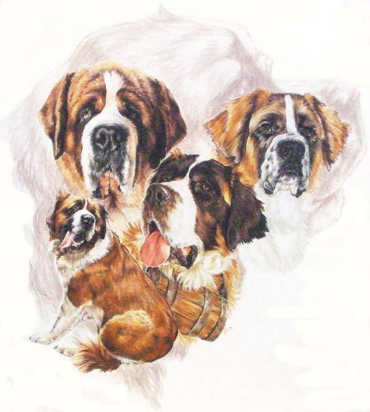 Wall Art - Mixed Media - Saint Bernard Grouping by Barbara Keith