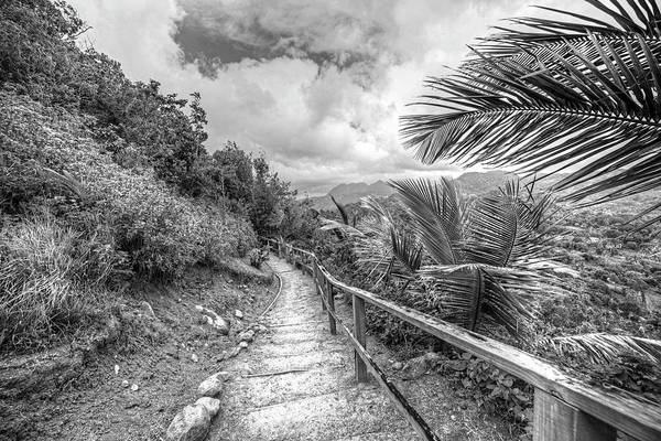 Photograph - Saint Lucia Hiking Trail Palm Trees Black Anf White by Toby McGuire