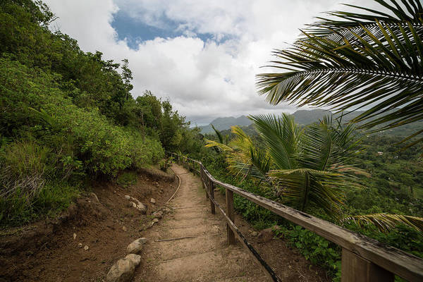 Photograph - Saint Lucia Hiking Trail Palm Trees by Toby McGuire