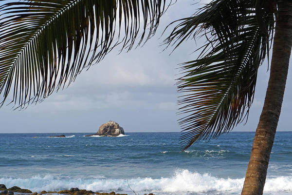 Photograph - Saint Lucia Palm Tree Small Rock Caribbean Flowing by Toby McGuire