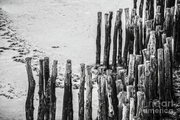 Wood Pile Photograph - Saint Malo by Delphimages Photo Creations