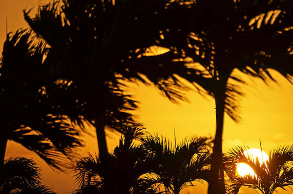 St. Maarten Photograph - Saint Martin Sunset Through The Palm Trees by Toby McGuire