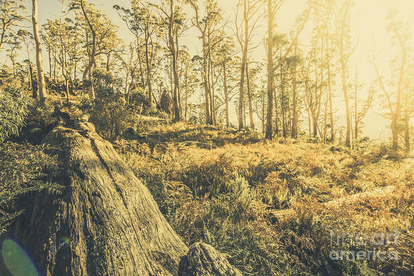 Photograph - Saint Marys Pass State Reserve Forest by Jorgo Photography - Wall Art Gallery