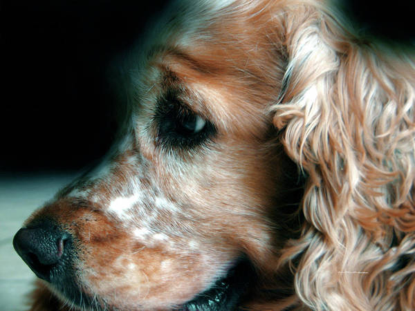 Digital Art - Saint Shaggy Art Photograph  13 by Miss Pet Sitter