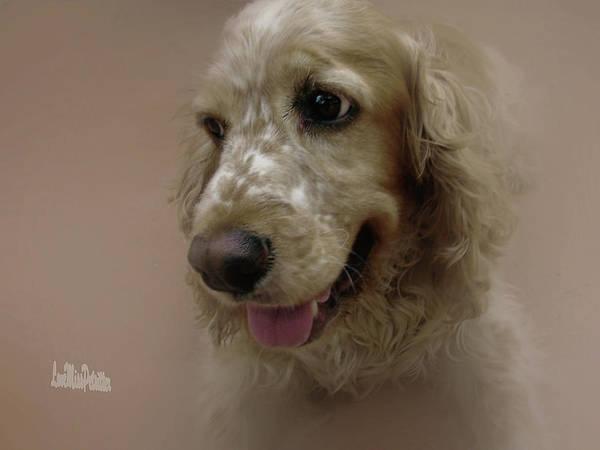 Digital Art - Saint Shaggy Portrait 28 by Miss Pet Sitter