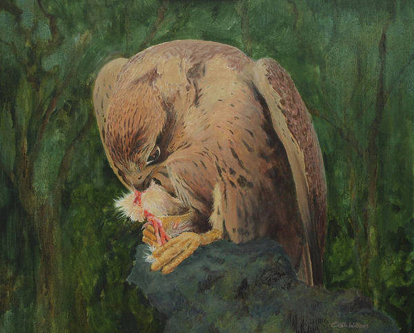 Painting - Saker Falcon Lunch by E Colin Williams ARCA