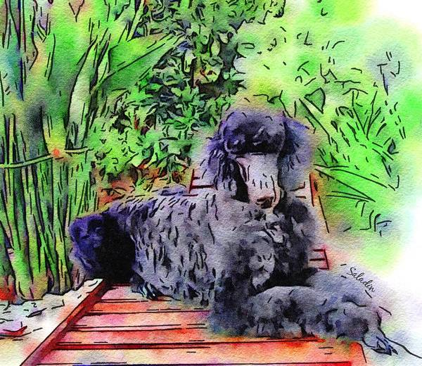 Poodle Digital Art - Saladin In Watercolor  by Painterly Images