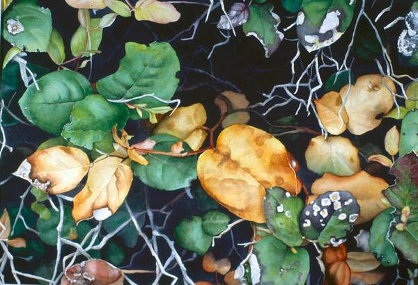 Painting - Salal by Barbara Pease
