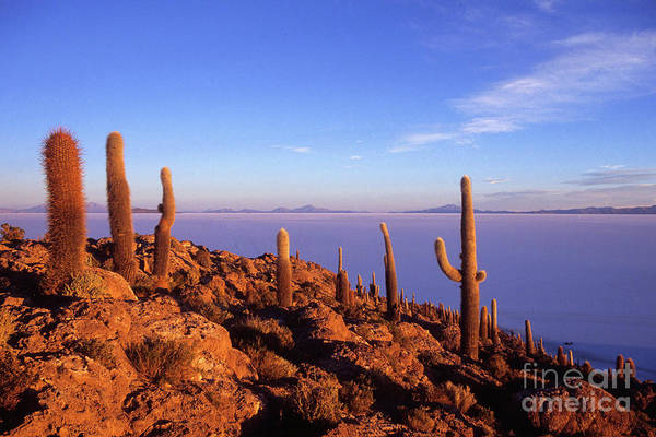 Photograph - Salar De Uyuni And Cacti At Sunrise by James Brunker