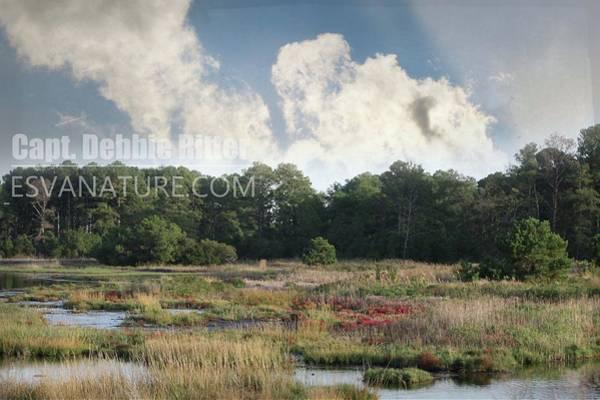 Photograph - Salicornia 0725 by Captain Debbie Ritter
