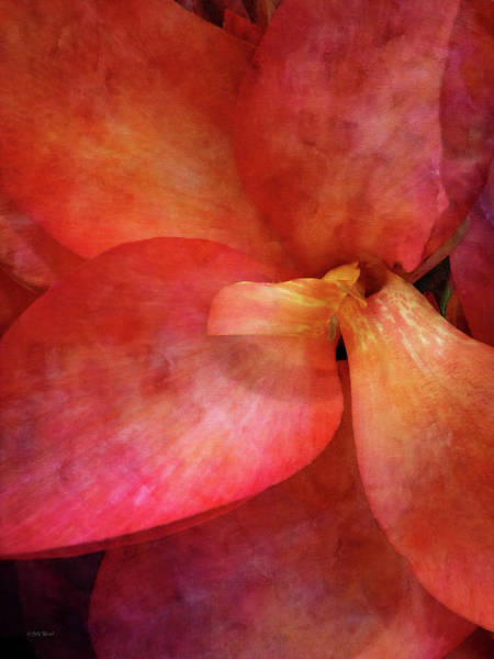 Photograph - Salmon Canna 4506 Idp_2 by Steven Ward
