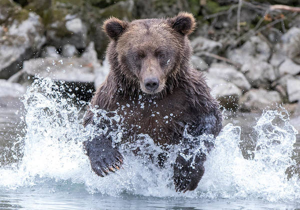 Photograph - Salmon Run  by Kevin Dietrich