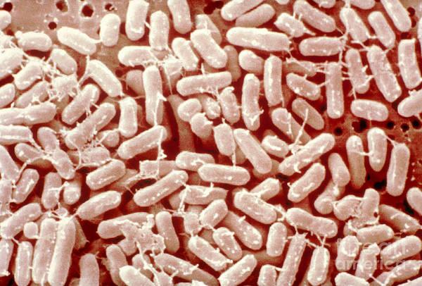 Wall Art - Photograph - Salmonella Bacteria by Scimat