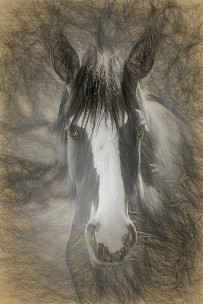 Photograph - Salt River Stallion by Teresa Wilson