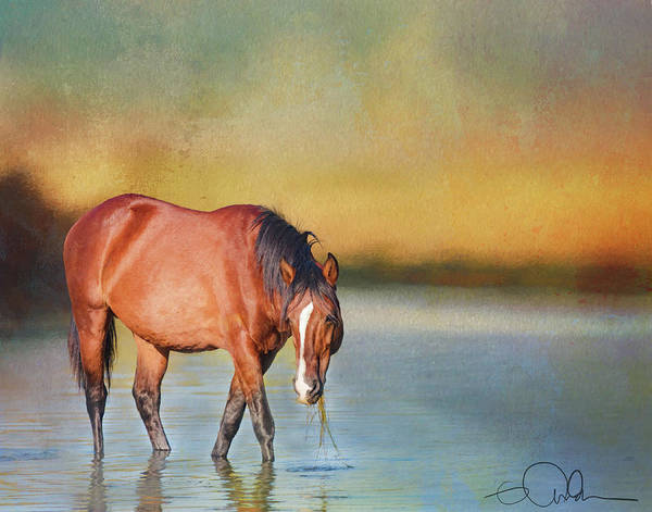 Photograph - Salt River Wild Horse by Gloria Anderson