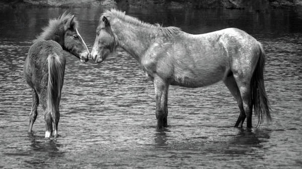 Photograph - Salt River Wild Horses 3015-032118-2cr by Tam Ryan