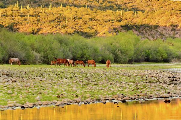 Photograph - Salt River Wild Horses by Emily Bristor