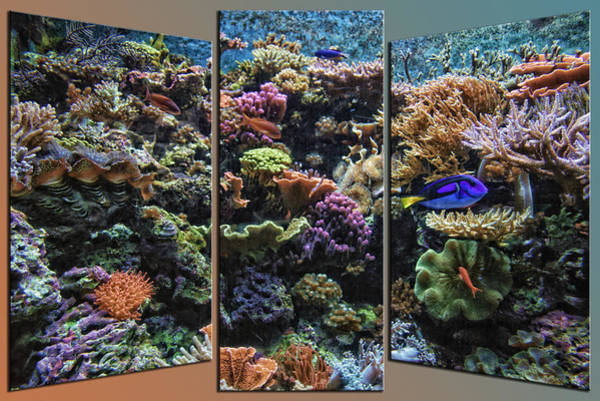 Doona Mixed Media - Salt Water Reef And Fish Triptych 3 Panel 01 by Thomas Woolworth