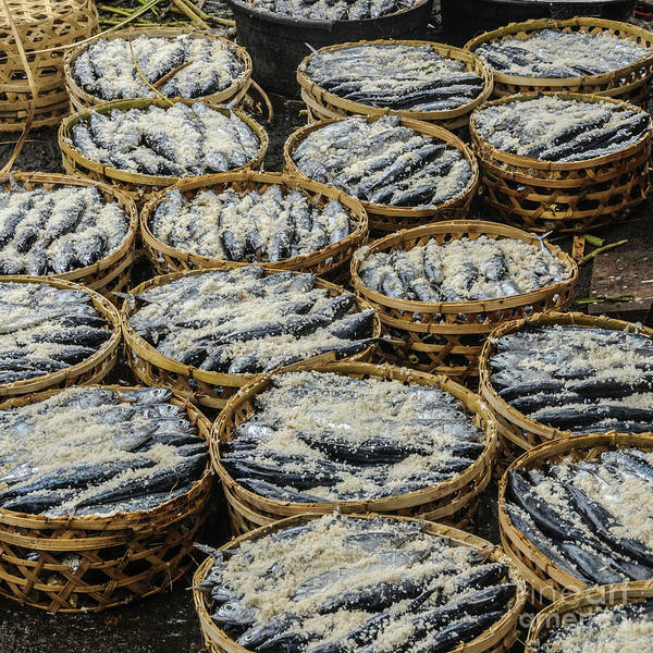 Photograph - Salted Fish by Werner Padarin