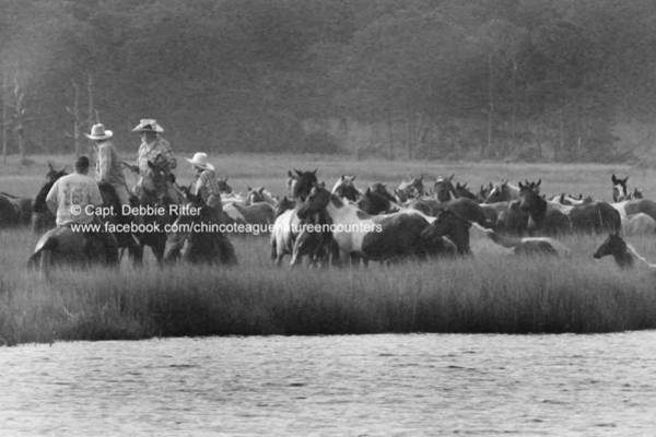 Photograph - Saltwater Cowboys by Captain Debbie Ritter