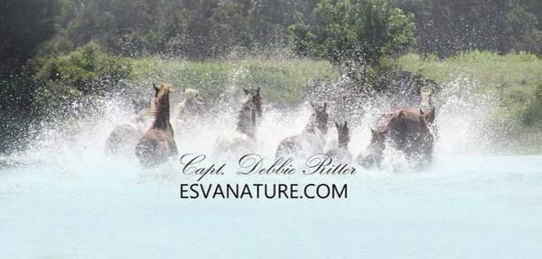 Photograph - Saltwater Splash C by Captain Debbie Ritter