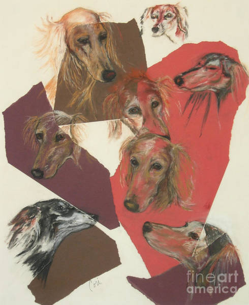 Sight Hound Drawing - Saluki Heads by Cori Solomon