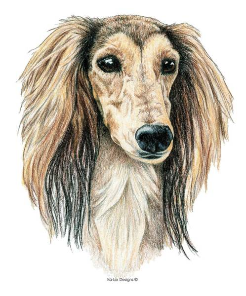Sight Hound Drawing - Saluki by Kathleen Sepulveda