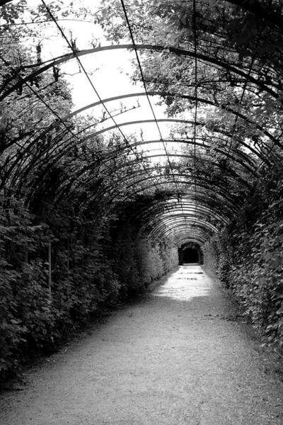 Vines Wall Art - Photograph - Salzburg Vine Tunnel - By Linda Woods by Linda Woods