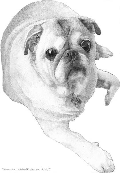 Pup Drawing - Samantha by Lorraine Zaloom