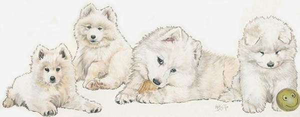 Wall Art - Mixed Media - Samoyed Puppies by Barbara Keith