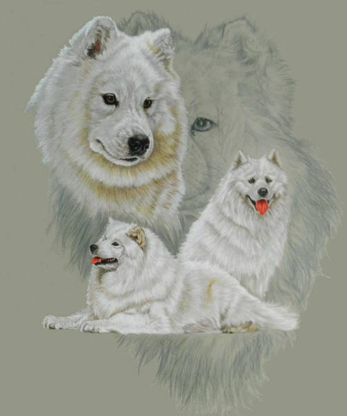 Mixed Media - Samoyed Revamp by Barbara Keith