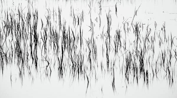 Photograph - San Diego River Grass In Black And White by TM Schultze