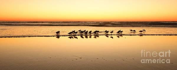 Photograph - San Diego Shorebirds by John F Tsumas