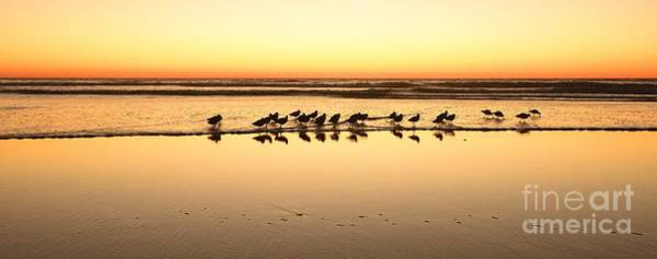 Wall Art - Photograph - San Diego Shorebirds by John F Tsumas