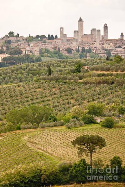 Photograph - San Gimignano II by Colette Panaioti