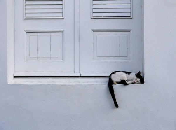Photograph - San Juan - Let Sleeping Cats Lie by Richard Reeve