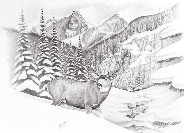 Elk Mountain Drawing - San Juan Muley by John Senior