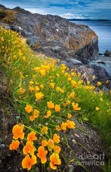 North Coast Harbor Photograph - San Juan Poppies by Inge Johnsson