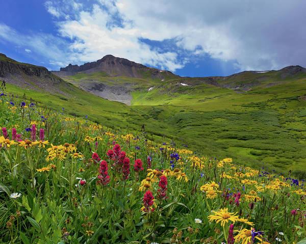 Alpine Meadows Photograph - San Juan Wildflowers by Bridget Calip